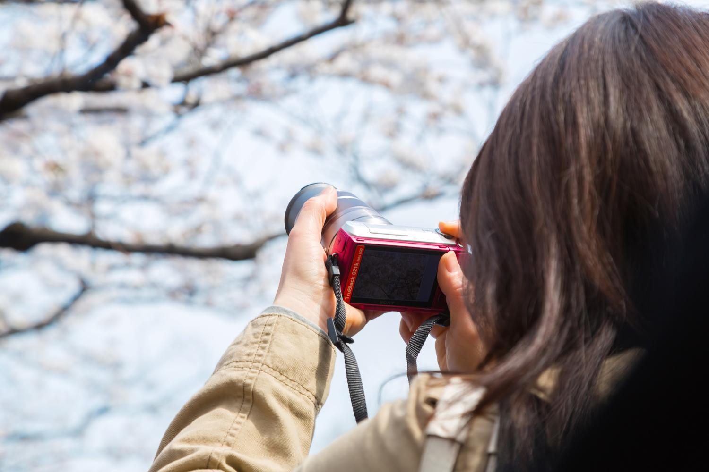 嵐山のおすすめ花見スポット!観光名所を巡る散策の旅!