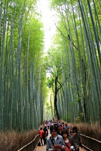 bamboo-forest-547293_640