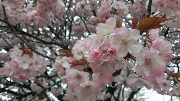 春ドライブin関西!車で吉野の桜を見に行く時の注意点!
