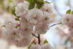 spring-flowers-949974__340