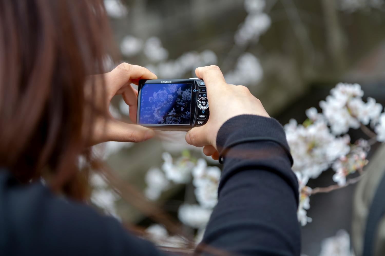 京都の枝垂桜の名所!清水寺~円山公園を巡る旅!