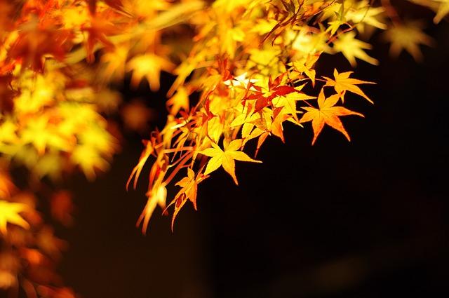 京都清水寺の紅葉の見ごろは?ライトアップのおすすめは?