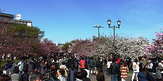 造幣局の桜の通り抜け!見ごろは?駐車場のおすすめはどこ?